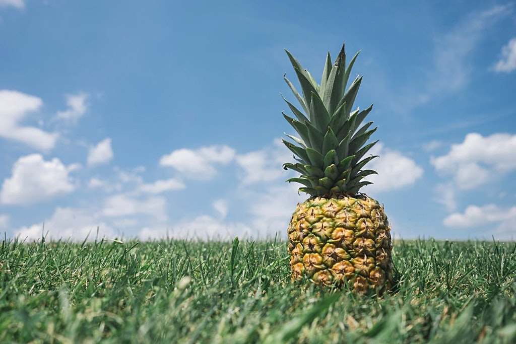 Get Free Pineapple Images