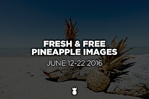 Our Freshest Free Pineapple Images