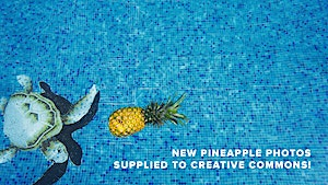 New Pineapples Supplied for Free Download