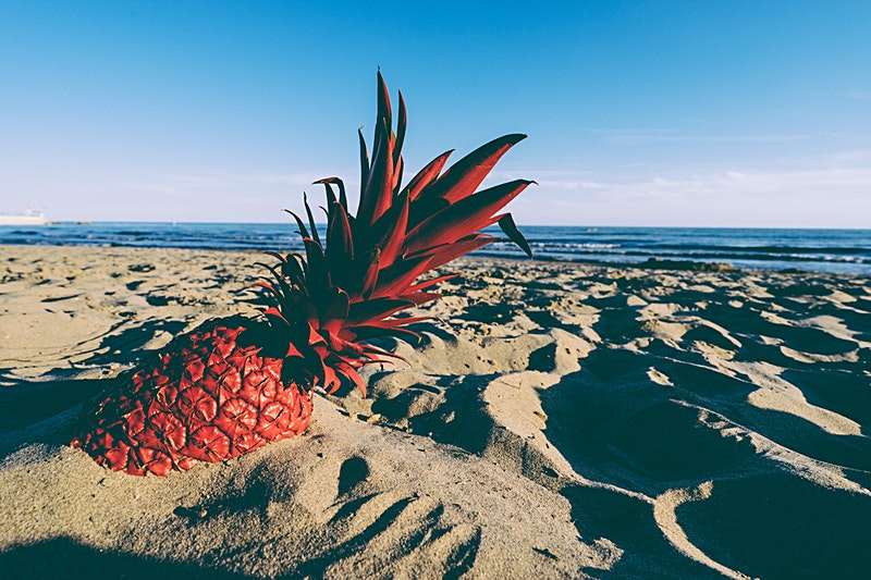 Red Pineapple laying in the beach sand